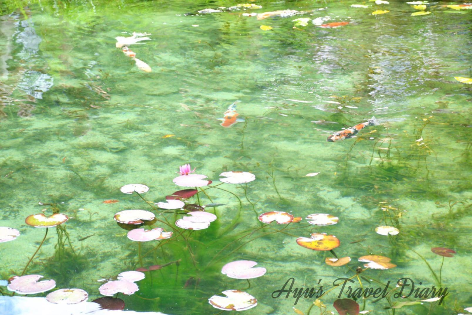 絶景で話題の「モネの池」