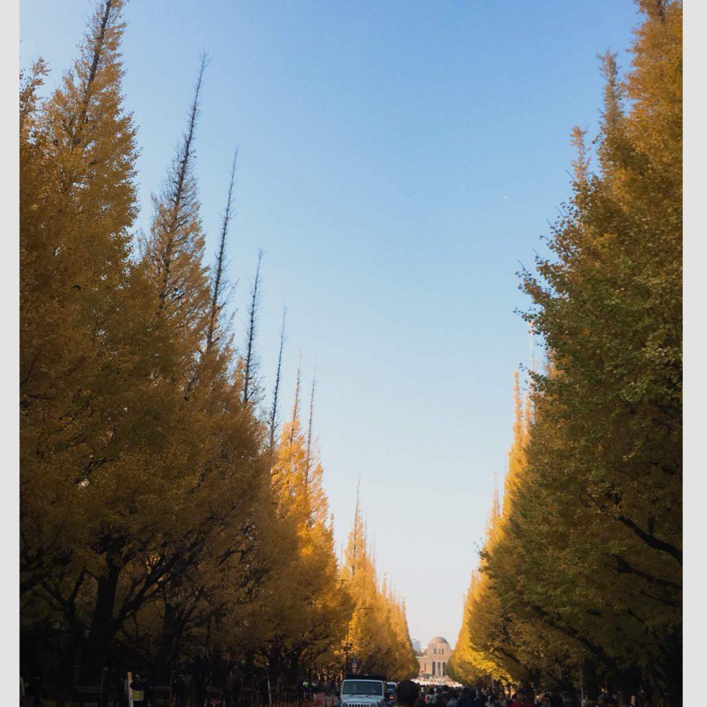 紅葉の季節!ロケ地でも有名な『神宮外苑 いちょう祭りへ』行って来ました。