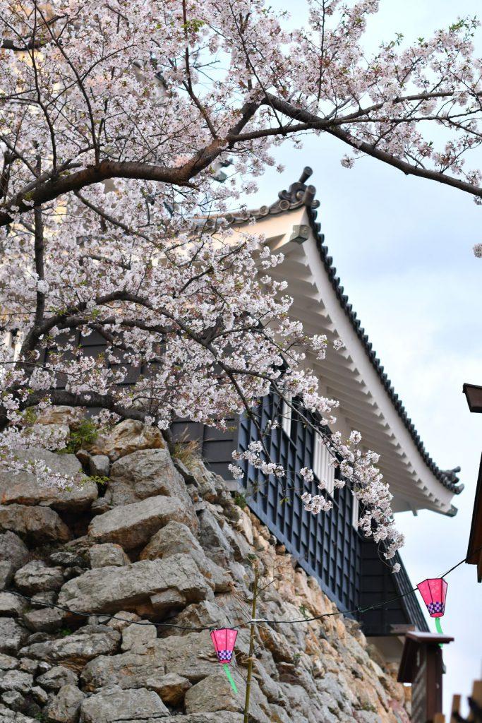 地元*浜松城で平成最後のお花見